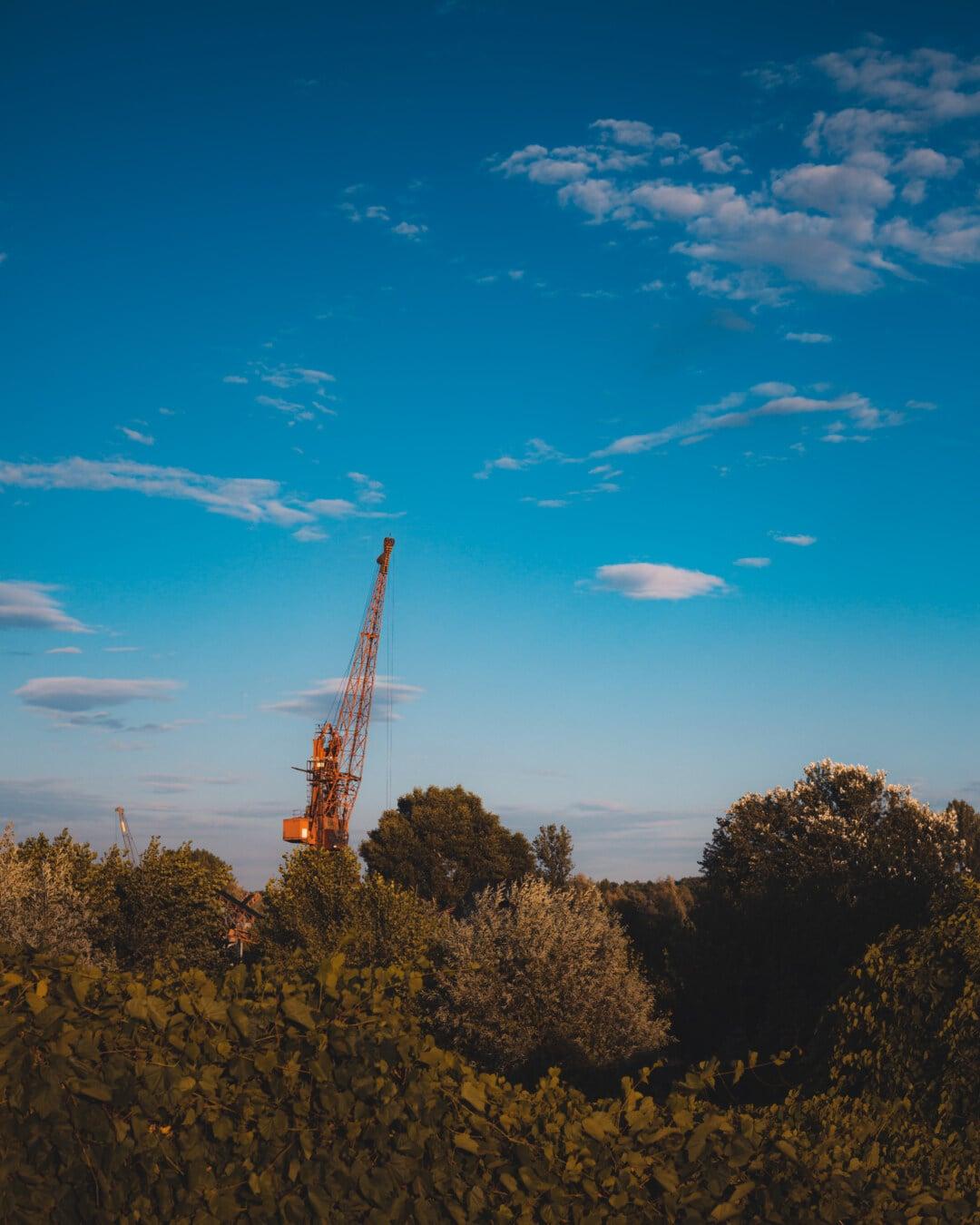 Crane, machine, industriel, bois, forêt, distance, paysage, arbre, atmosphère, aube