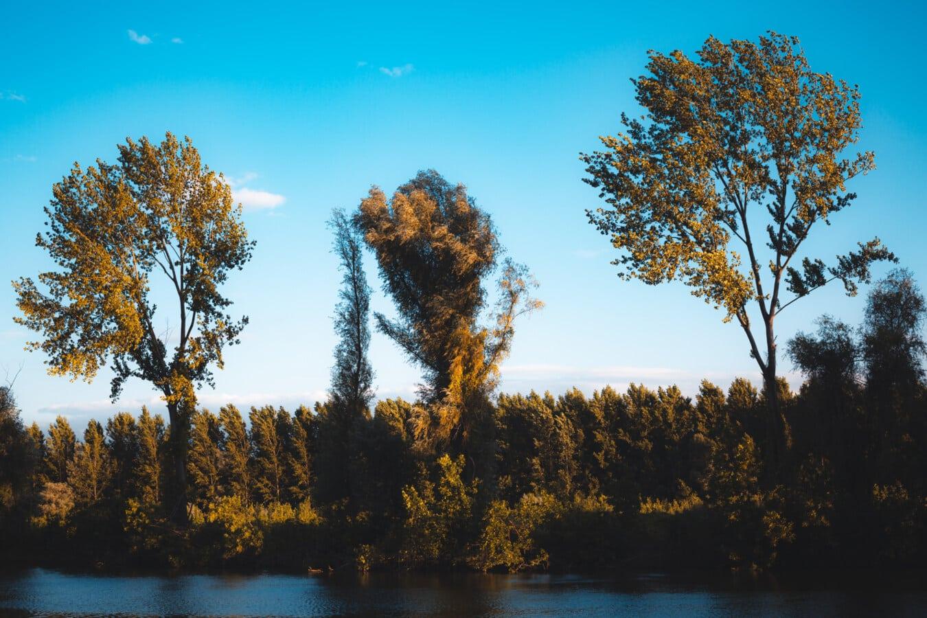 lake, lakeside, autumn season, forest, woodland, poplar, landscape, leaf, lighting, dawn