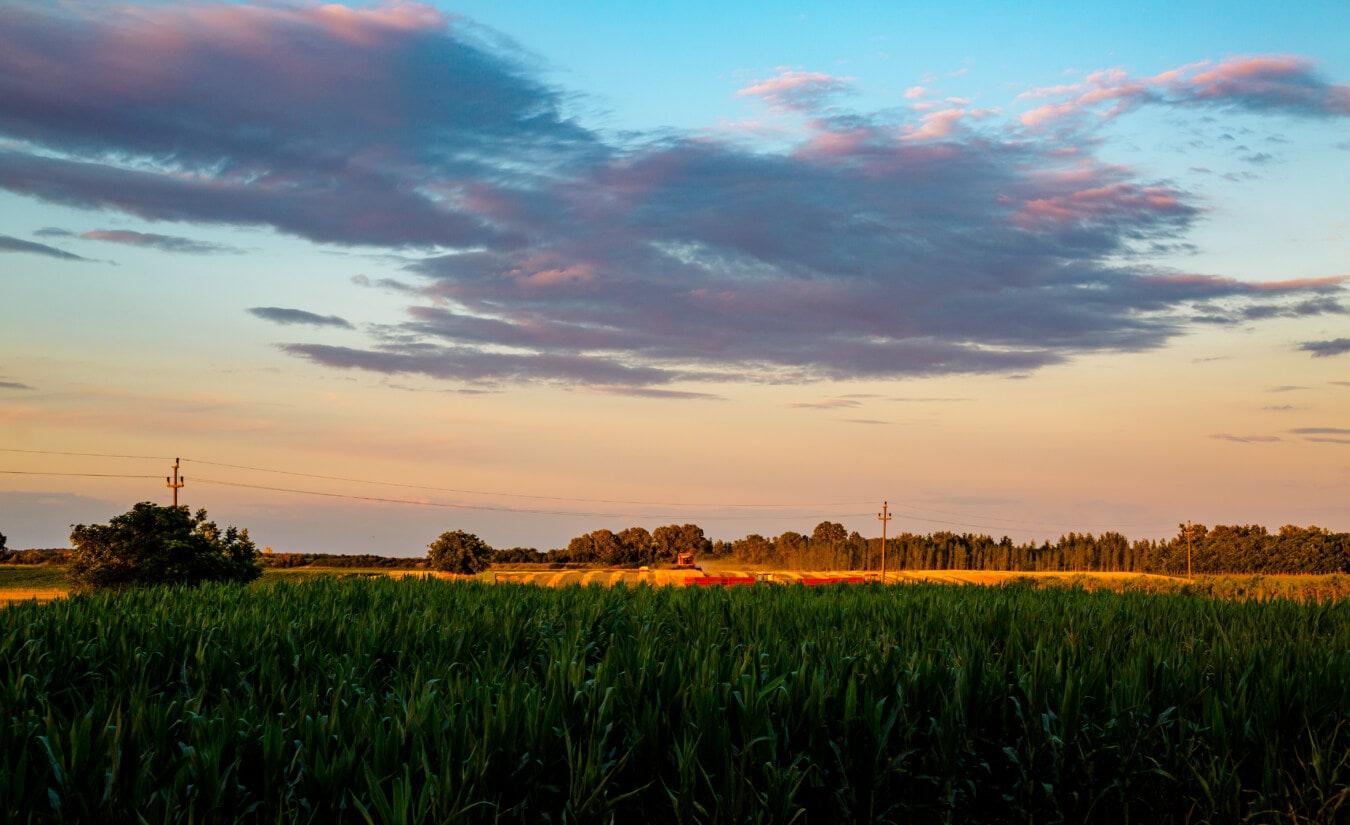 nuages, bleu foncé, champ de maïs, agricole, domaine, rural, aube, Agriculture, coucher de soleil, paysage