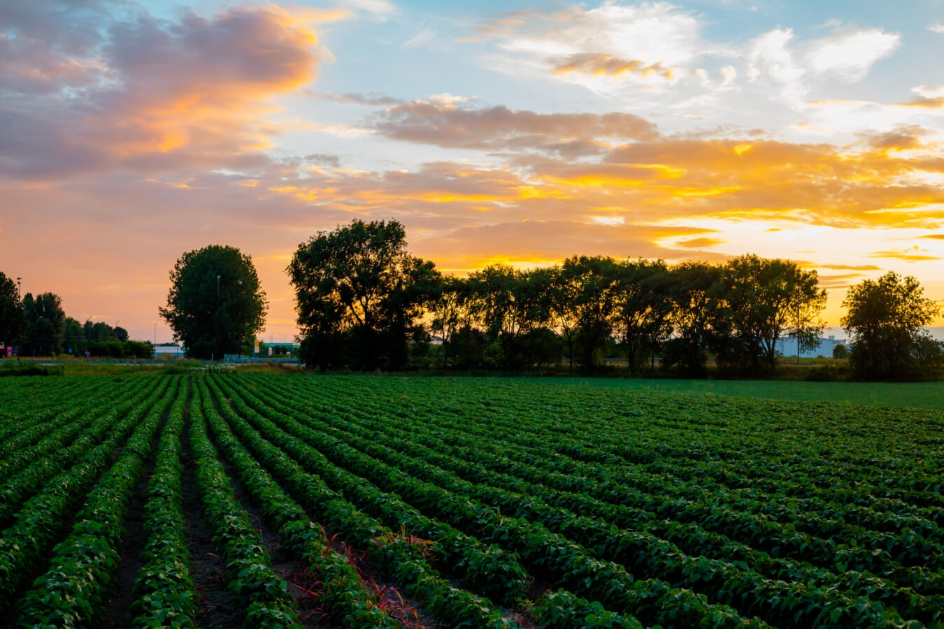 Soja, Landwirtschaft, Sojabohne, Feld, Atmosphäre, majestätisch, Sonnenuntergang, des ländlichen Raums, Landschaft, Labyrinth