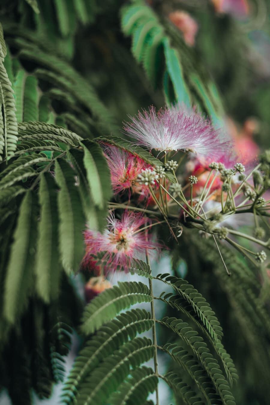 tree, branchlet, flowers, beautiful, tropical, herb, exotic, leaf, shrub, plant