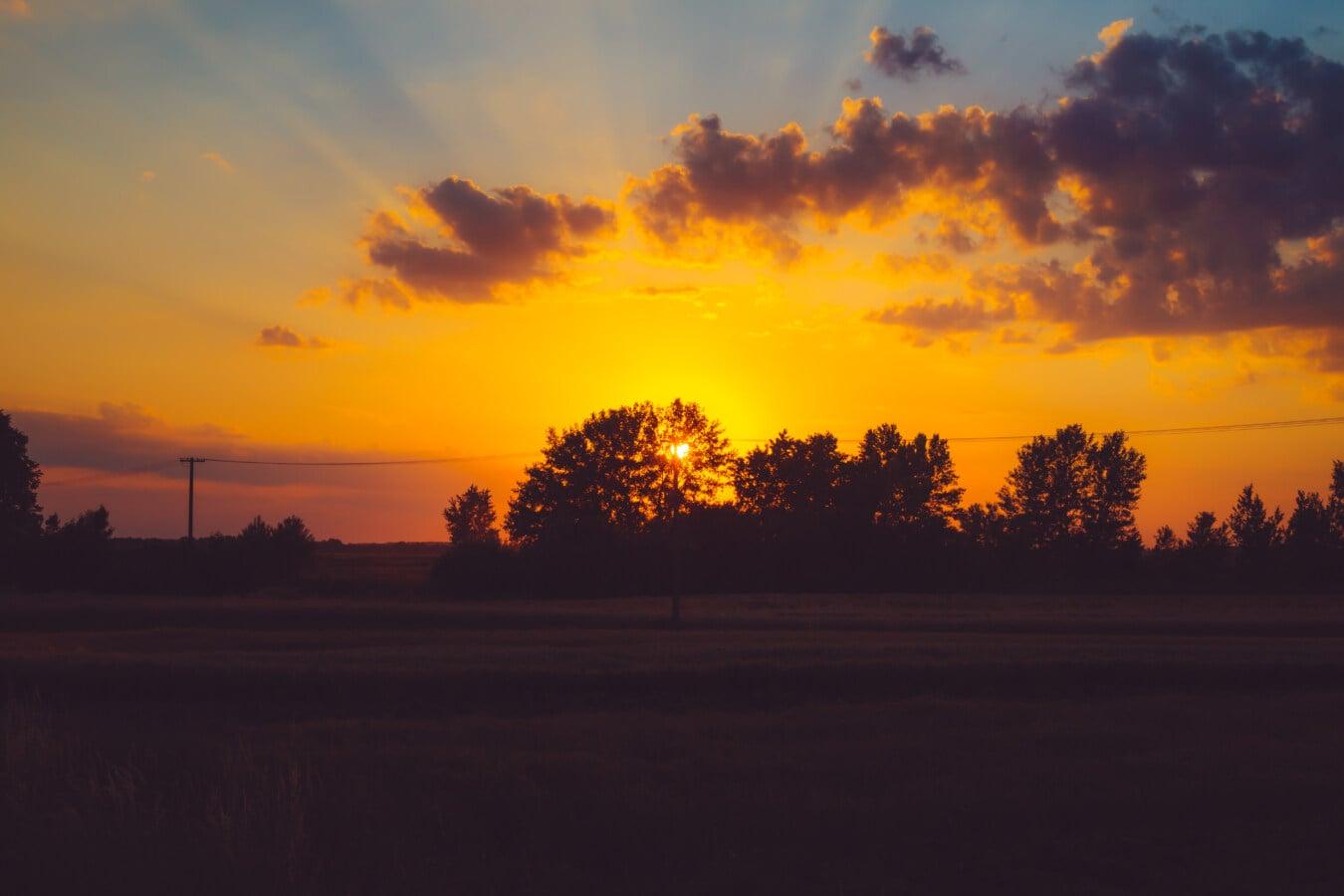 crépuscule, coucher de soleil, rétro-éclairé, majestueux, silhouette, blé, champ de blé, arbres, aube, Star