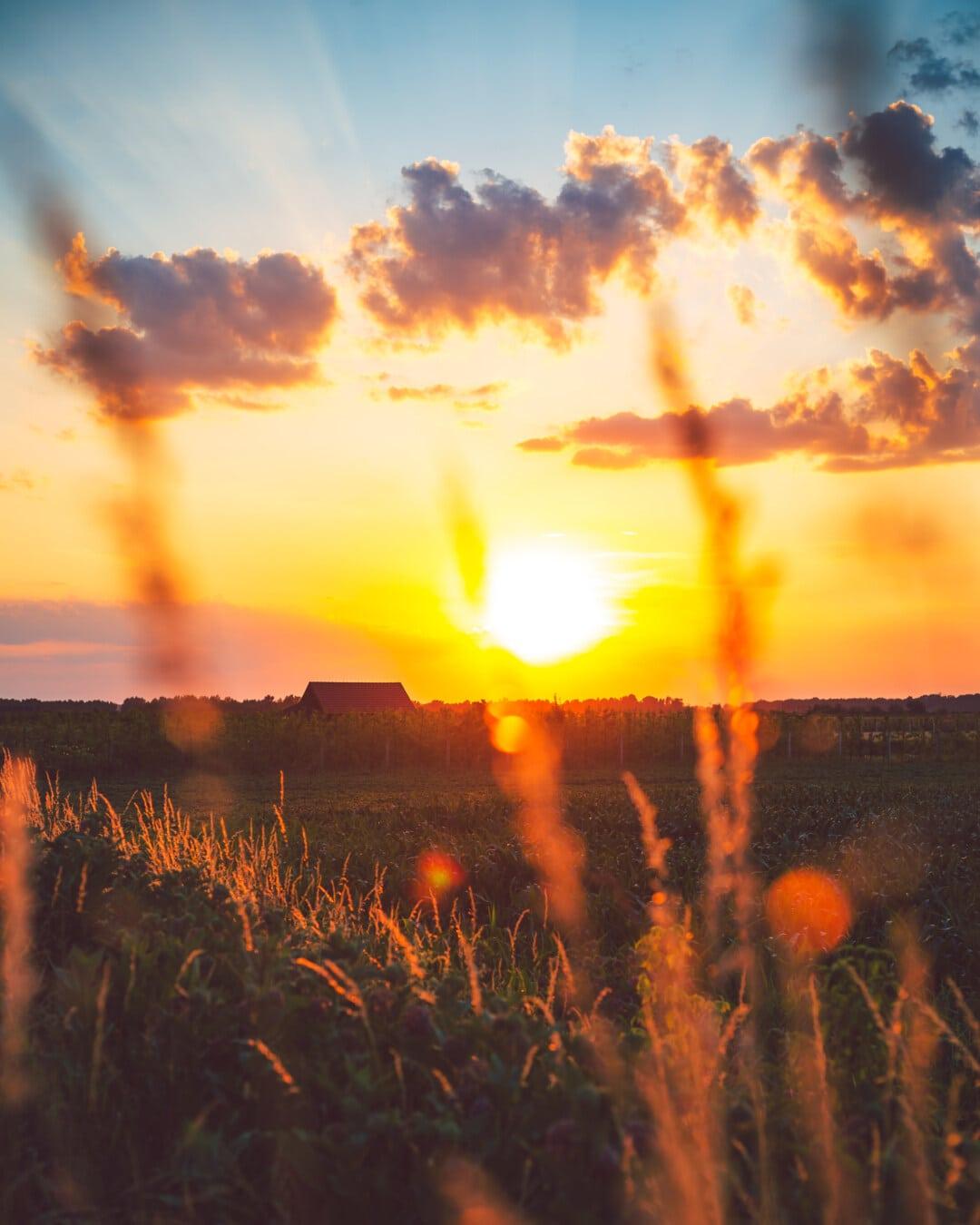 naplemente, beszűrődik, nap, napos, napsütés, Napsugárzás, mezőgazdaság, gyümölcsös, mező, Hajnal