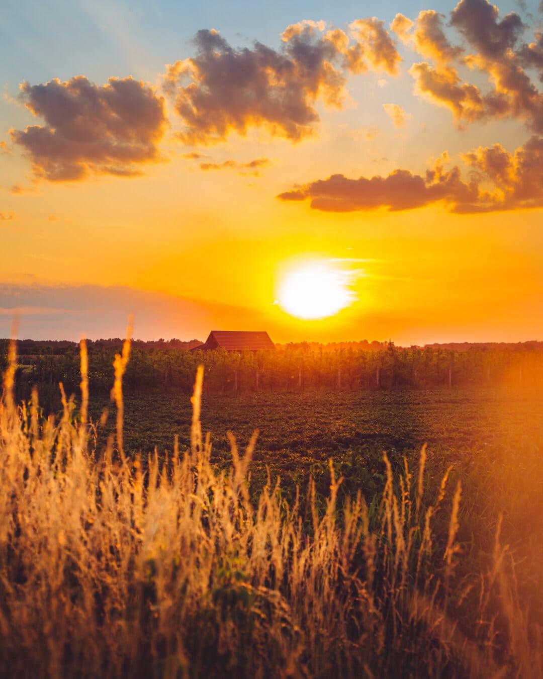 sunčano, sunčev zrak, sunčano, sunčeva svjetlost, seoska kuća, poljoprivredno zemljište, farma, voćnjak, poljoprivreda, zalazak sunca