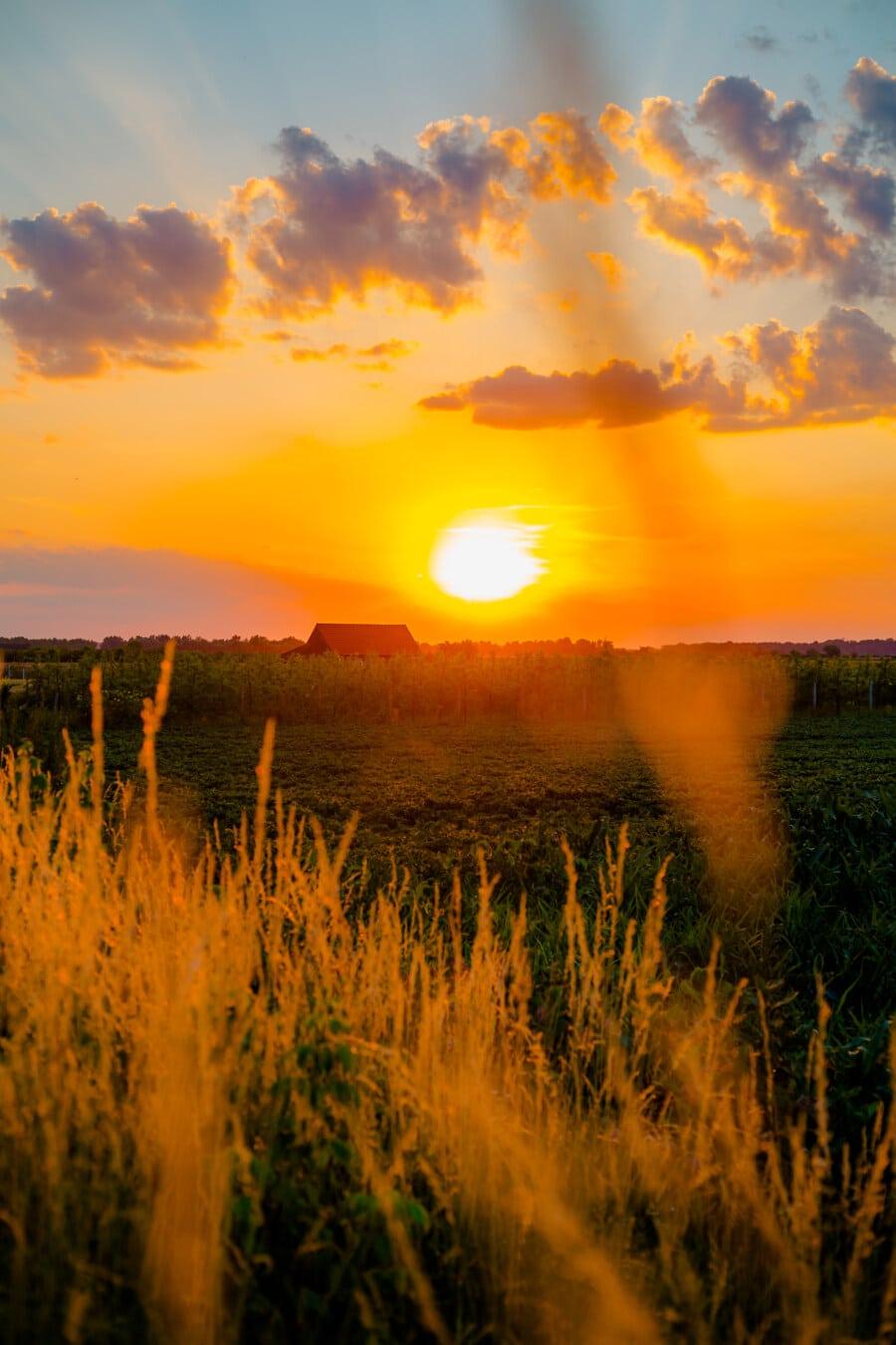 Sonne, Obstgarten, Sonnenlicht, hell, Ackerland, Sonnenuntergang, Wolken, Sterne, Landschaft, Sonnenaufgang