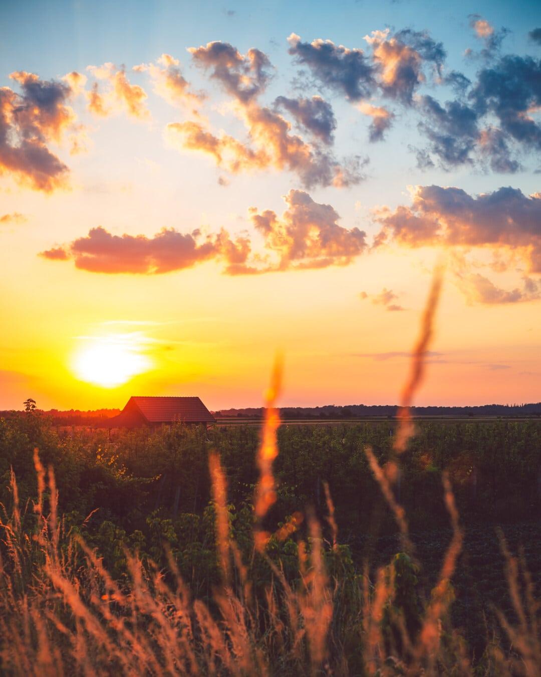 coucher de soleil, les terres agricoles, ferme, verger, lever du soleil, soleil, paysage, aube, soirée, beau temps