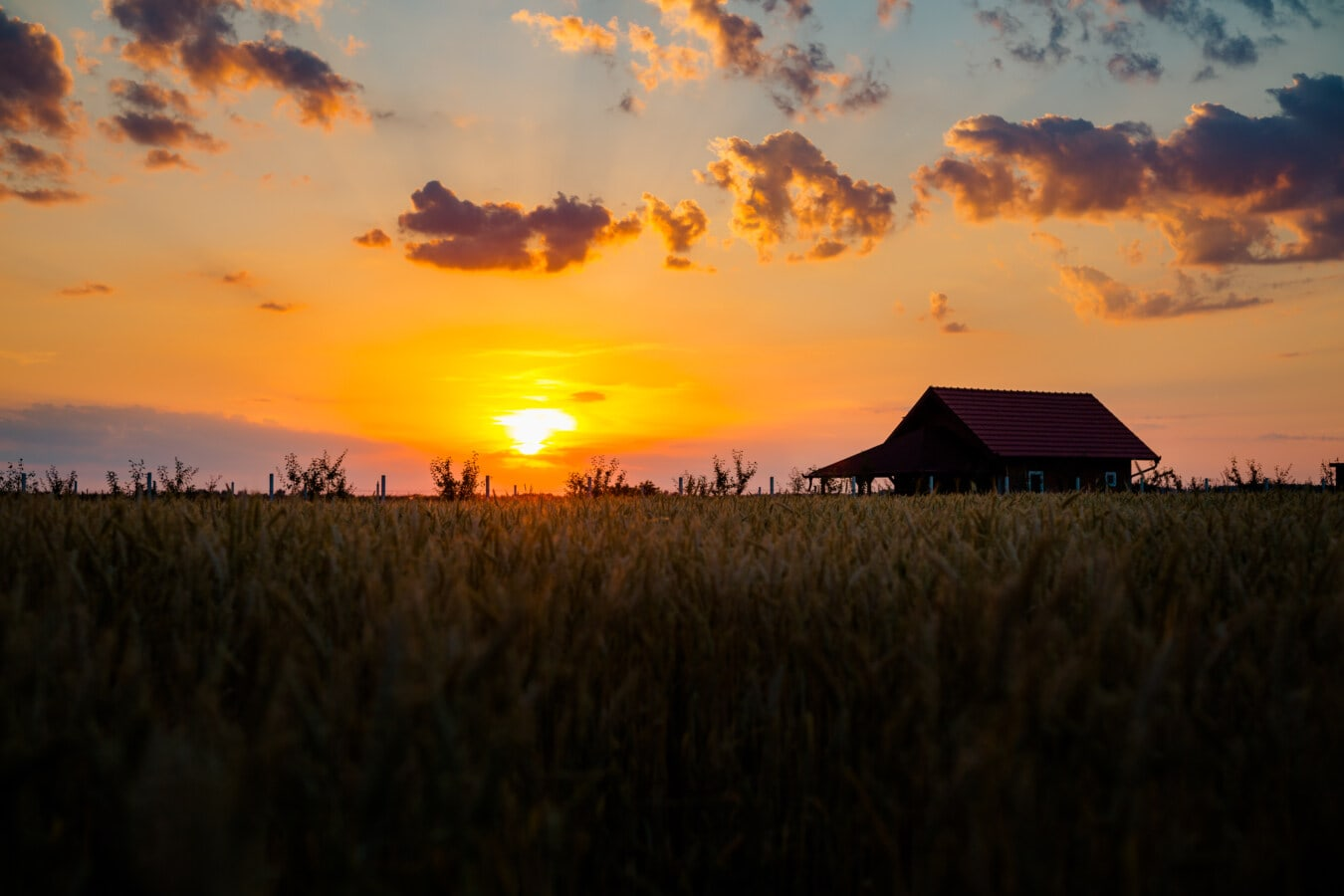 paysage, majestueux, champ de blé, ferme, les terres agricoles, ferme, blé, crépuscule, ténèbres, ombre