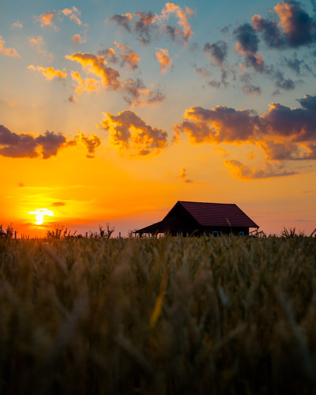 Weizen, Weizenfeld, Bauernhaus, Ackerland, Sonnenuntergang, Landschaft, Sonne, Dämmerung, Struktur, Landschaft