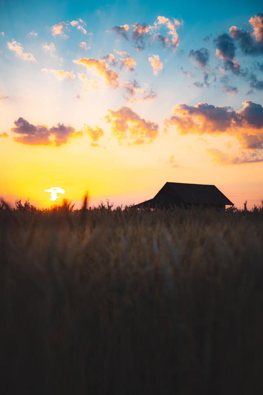 lahan pertanian, pertanian, rumah pertanian, matahari terbit, sinar matahari, Sinar matahari, TNI AU, gandum, matahari, pemandangan