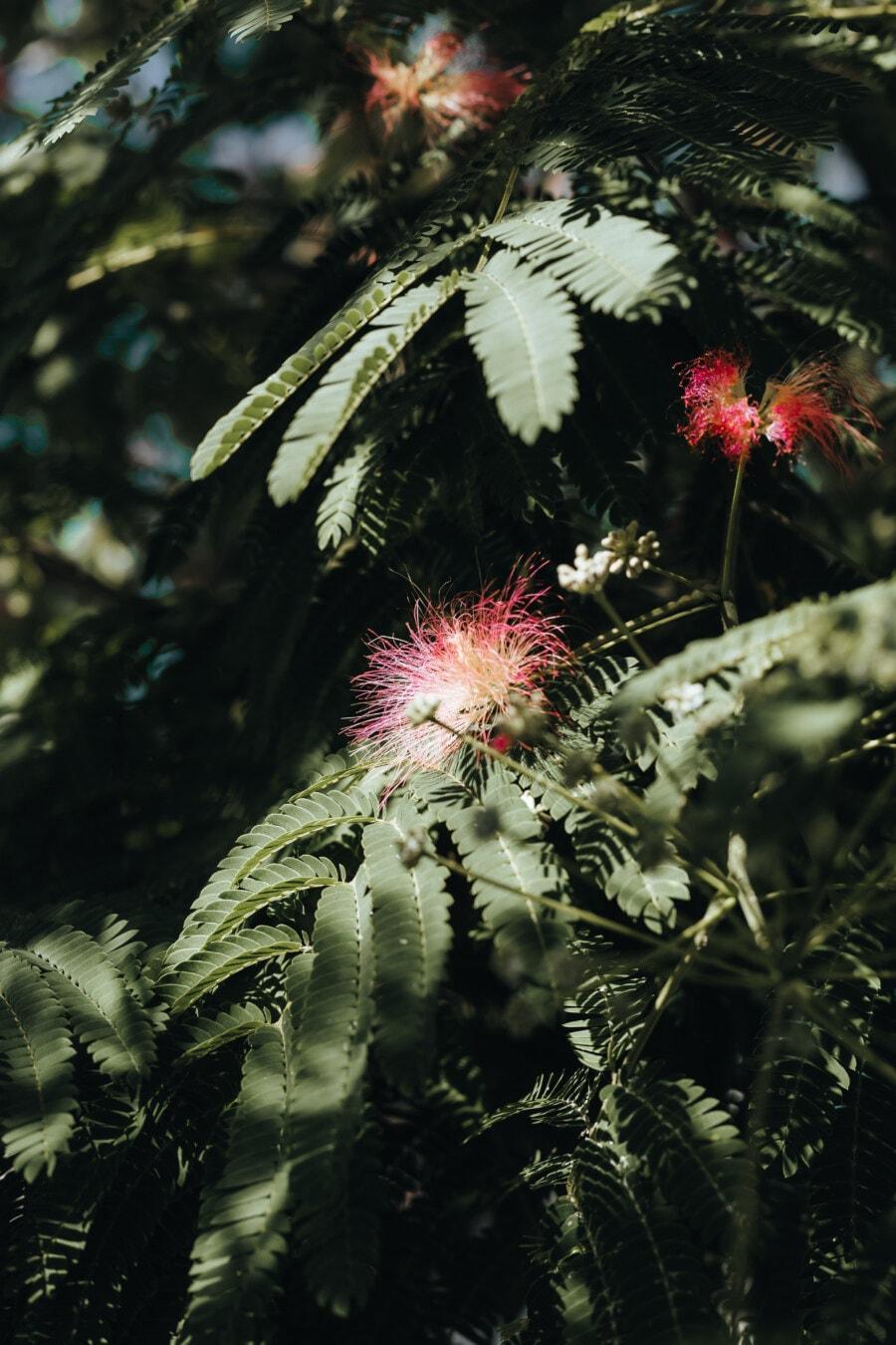 branches, shade, shadow, green leaves, flowers, pinkish, shrub, plant, tree, nature
