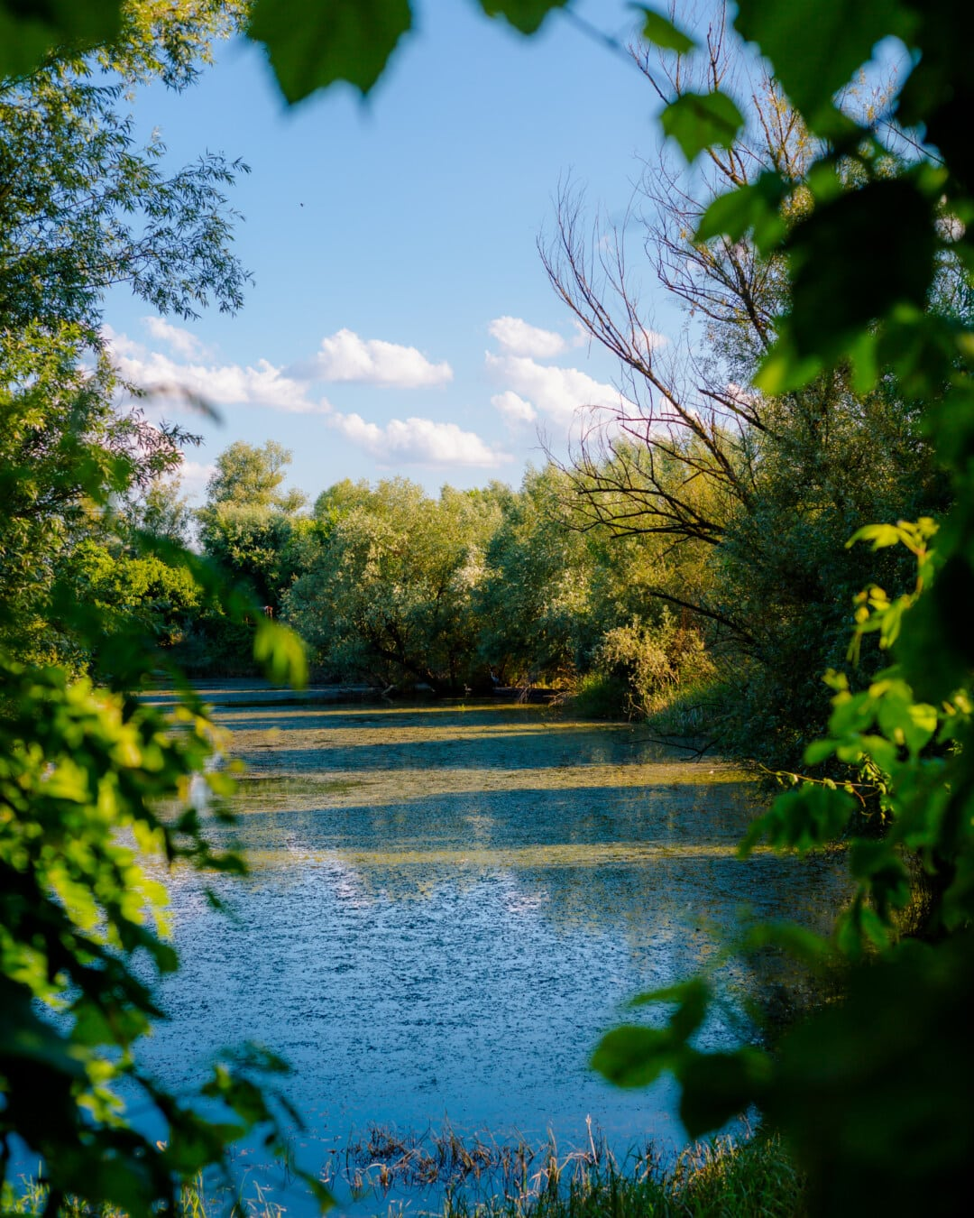 swamp, channels, marshland, ecosystem, aquatic plant, water, park, tree, plant, leaf