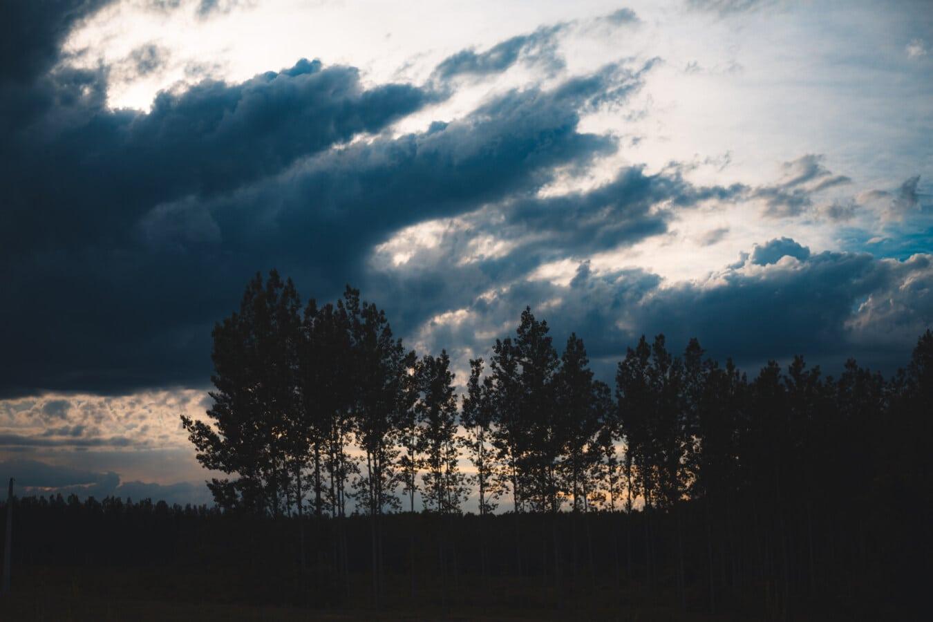 soumraku, lilek, soumrak, noční, tmavě modrá, silueta, stromy, les, západ slunce, Dawn