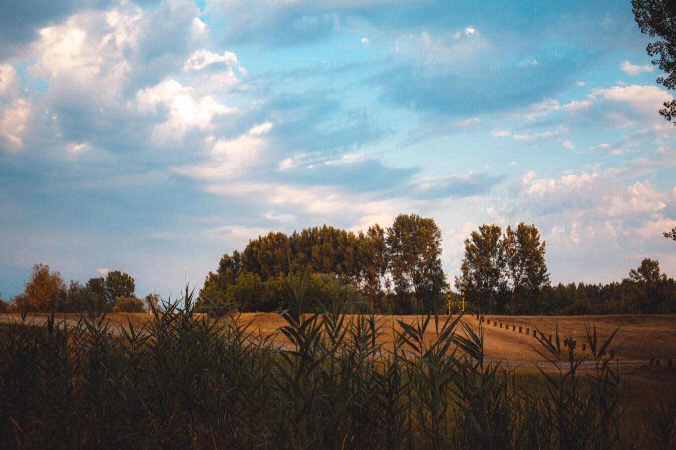 drumul, plop tremurător, coastă de deal, mare, iarba, Sezonul de vară, atmosfera, rurale, peisaj, câmp