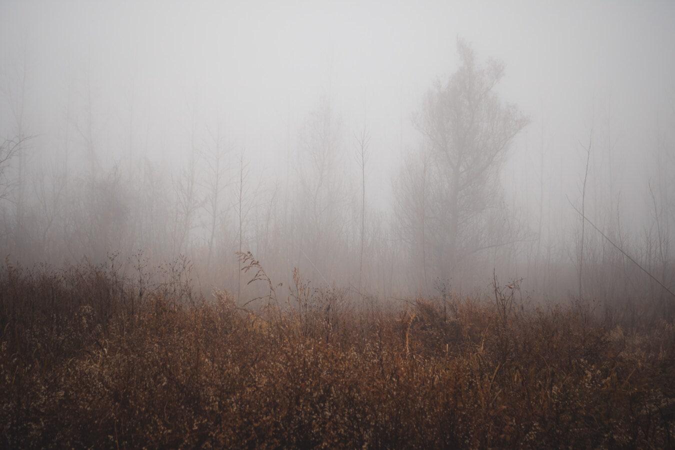 hmla, jesennej sezóny, hmla, kríky, les, ráno, svitania, Príroda, drevo, strom