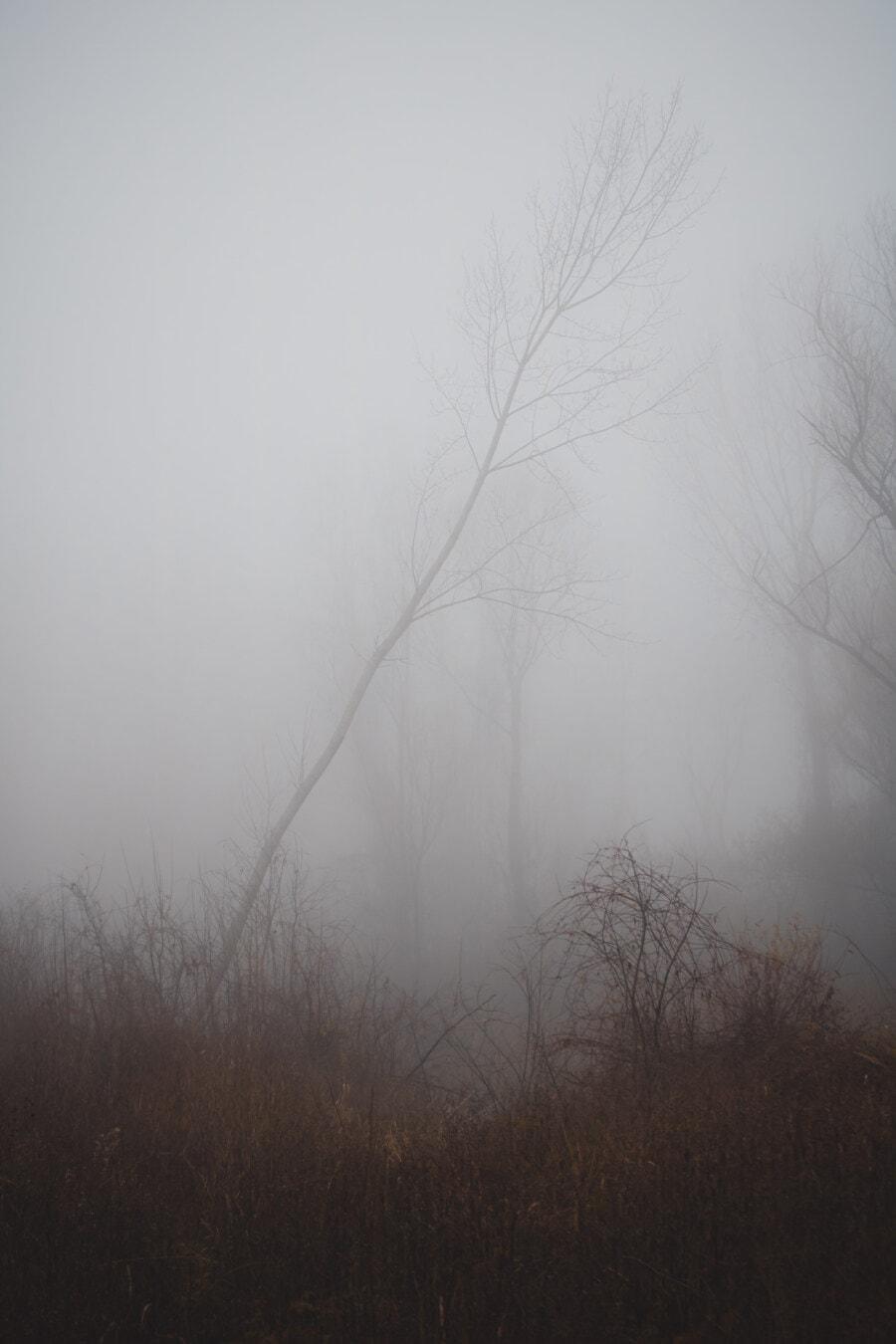 hämärä, sumuinen, sumu, metsä, siluetti, puut, kylmä, sumu, maisema, puu
