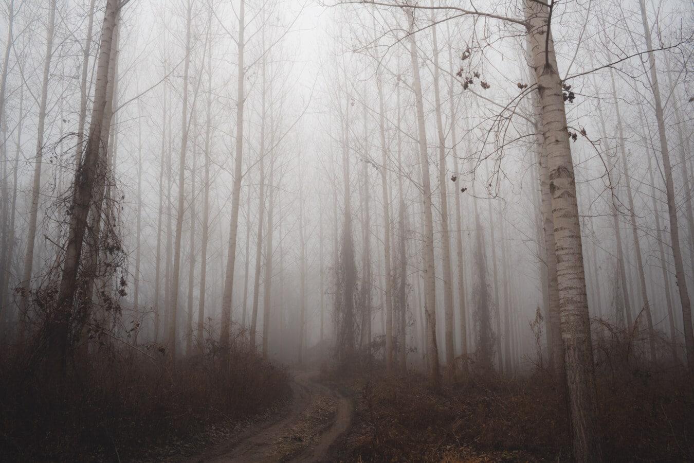 foggy, forest, forest path, winter, fog, wood, landscape, mist, tree, dawn