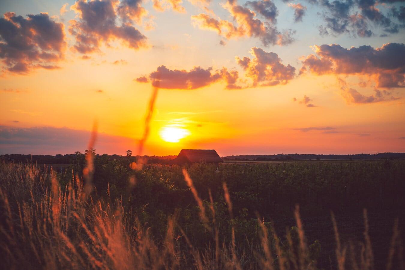 çiftlik, tarım arazisi, günbatımı, meyve bahçesi, Tarım, cennet gibi, görkemli, manzara, gündoğumu, Güneş