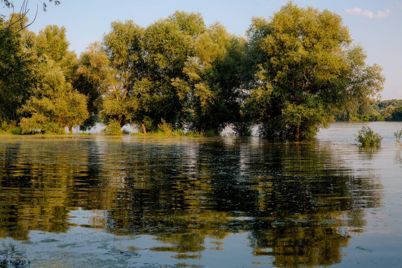 Aue, Flussufer, Fluss, Flut, Frühling, Landschaft, Struktur, Wasser, See, Anlage