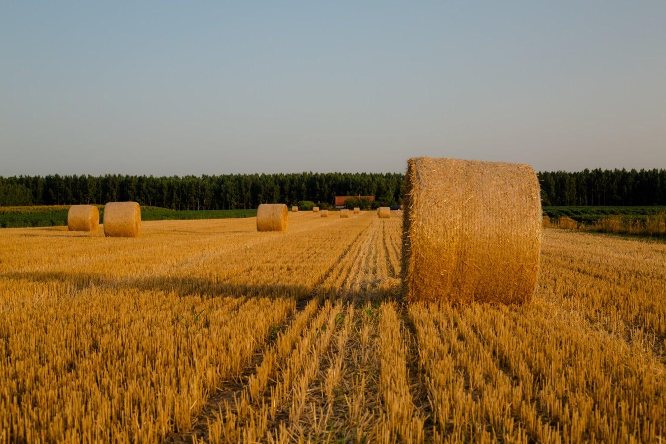 kerek, bála, haying, széna mező, széna, farm, vidéki, mező, mezőgazdaság, takarmány