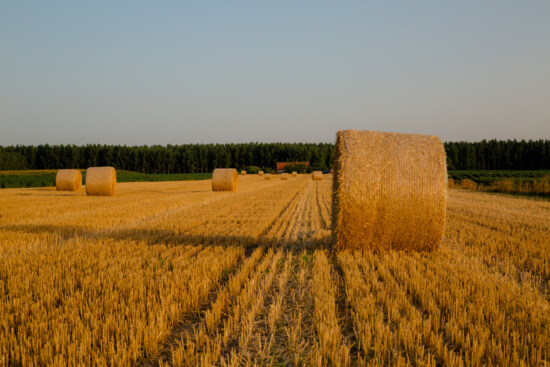 round, bale, haying, hay field, hay, farm, rural, field, agriculture, feed