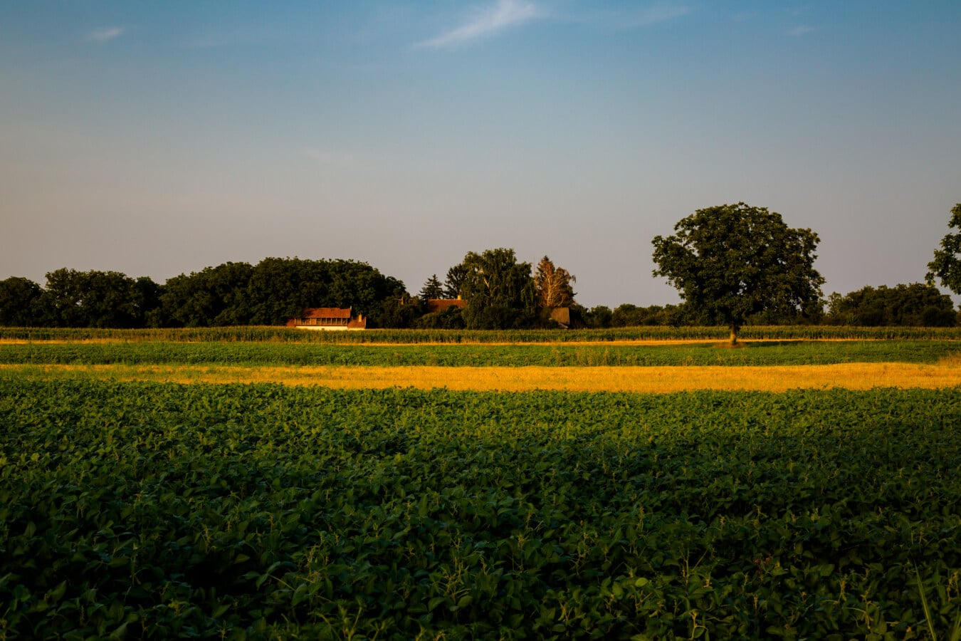 rural, field, farm, landscape, agriculture, summer, tree, countryside, horizon, spring