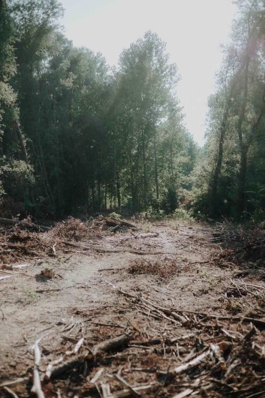 forêt, bois de chauffage, paysage, bois, nature, arbre, feuille, à l'extérieur, aube, beau temps