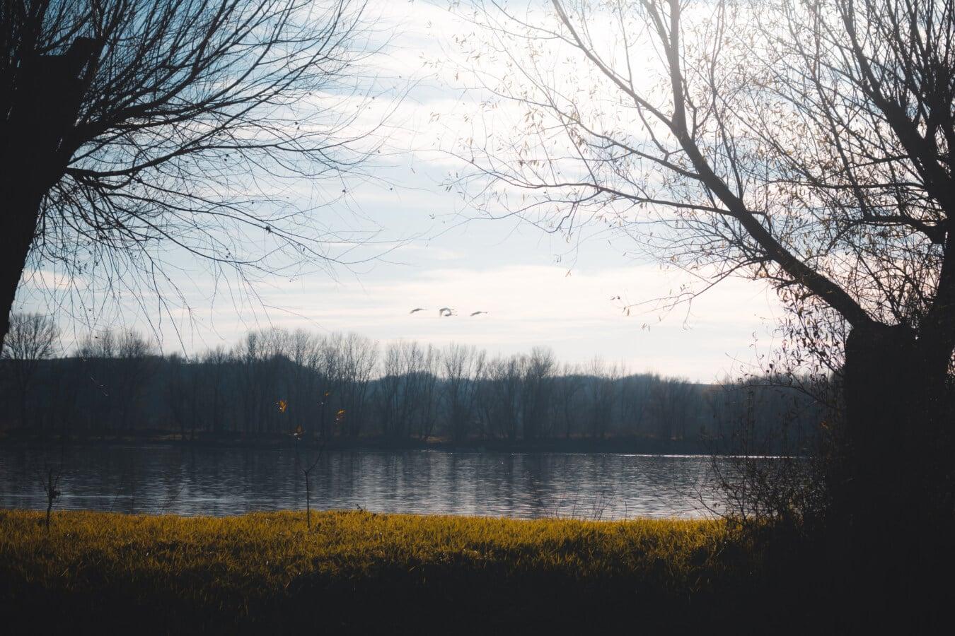 Dämmerung, Atmosphäre, Wald, Landschaft, Wasser, Fluss, Struktur, Holz, Natur, Reflexion