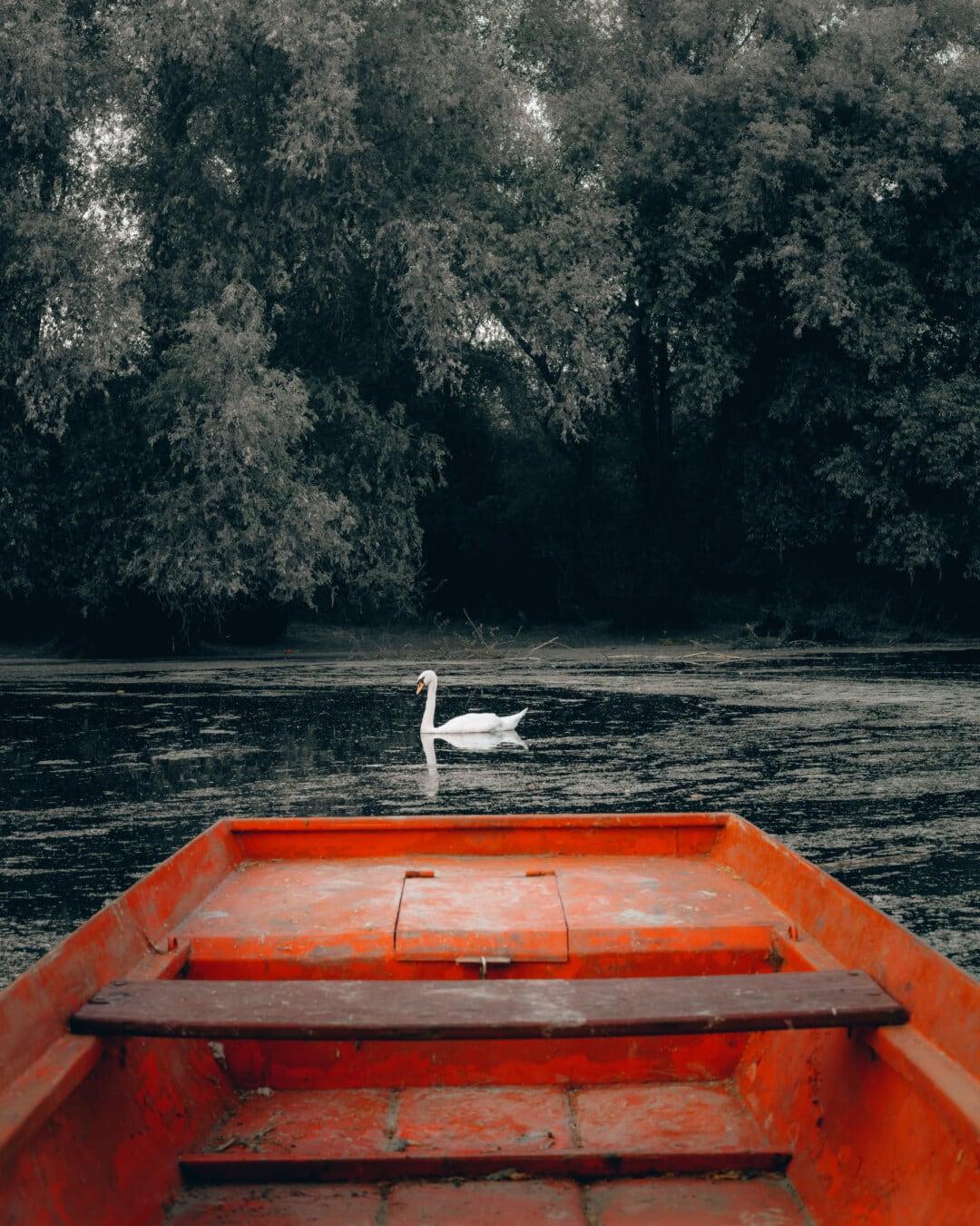 marais, zones humides, rouge foncé, bateau, cygne, oiseau, eau, Lac, embarcation, des loisirs
