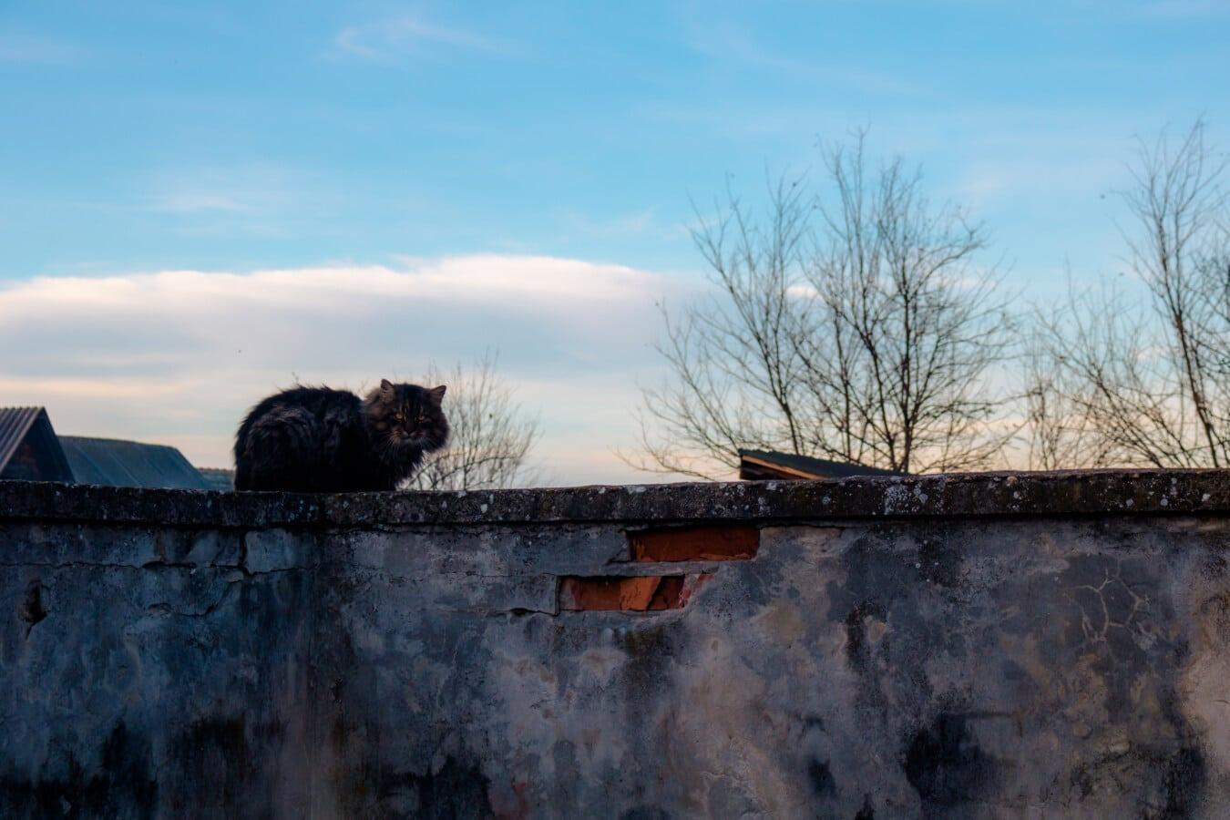 huskatten, tegelstenar, väggen, övergiven, naturen, arkitektur, gamla, Utomhus, djur, blå himmel