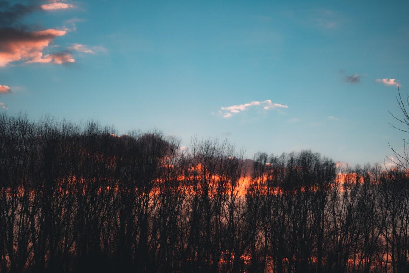 Sonnenaufgang, Wald, Bäume, Dämmerung, Natur, Holz, Landschaft, Sonne, Struktur, Schönwetter