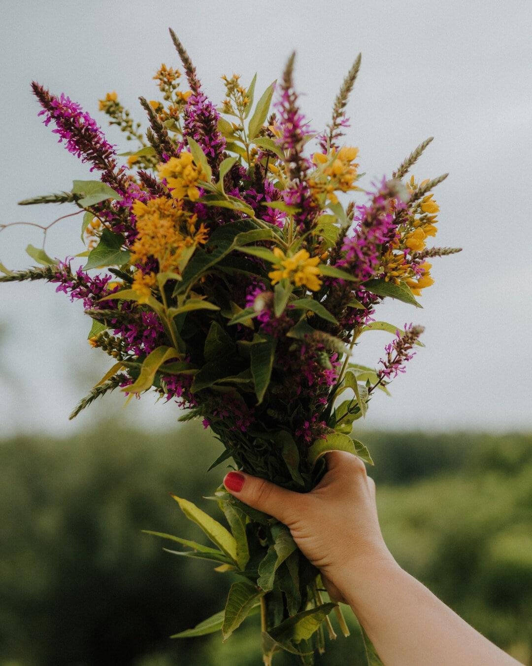bouquet, coloré, fleurs sauvages, Holding, main, doigt, vernis à ongle, nature, fleur, épanouissement