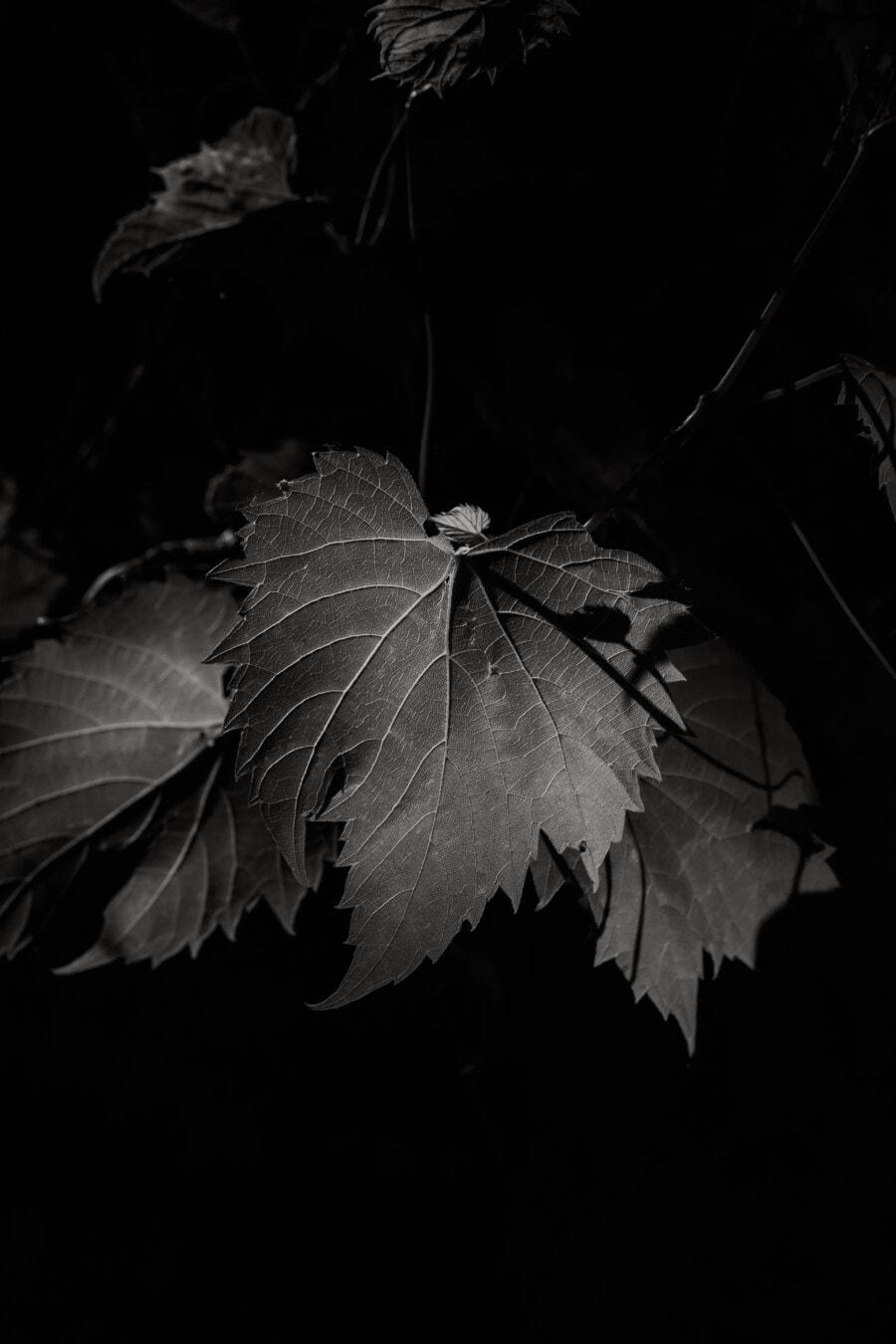 czarno-białe, monochromatyczne, liść, cień, ciemności, gałązka, cień, sztuka, tekstury, kontrast