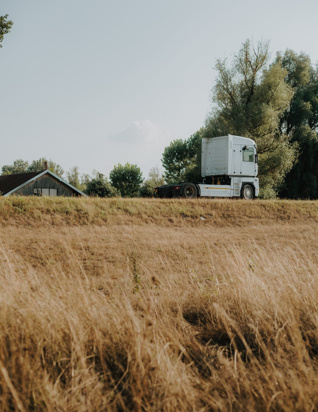white, truck, aspen, hill, agriculture, nature, rural, countryside, tree, outdoors