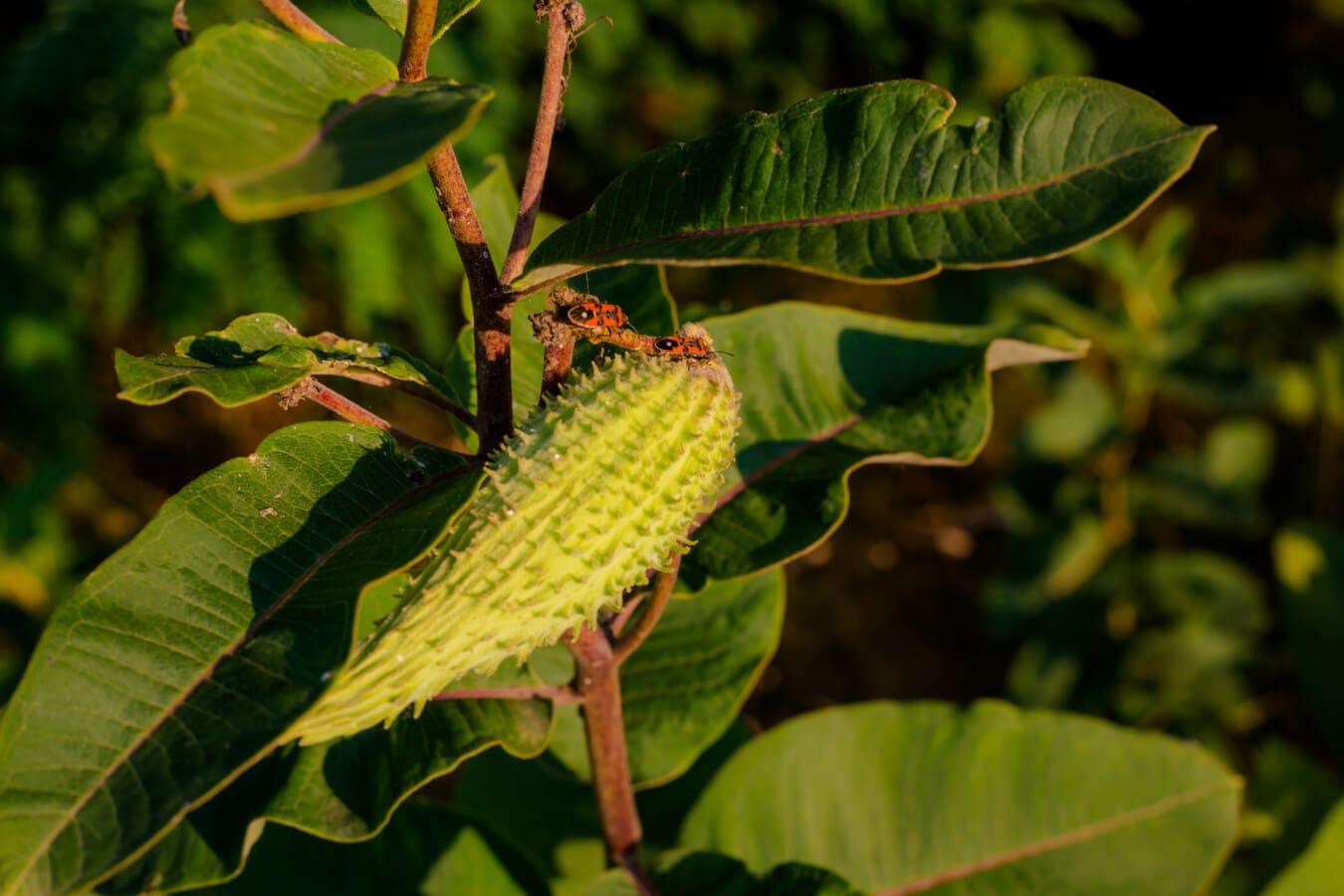 buba, kukac, zeleno lišće, grane, list, priroda, drvo, boja, grm, pogled iz blizine