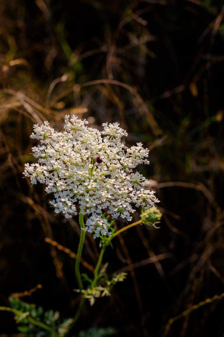 white flower, wildflower, natural habitat, grass plants, nature, flower, leaf, summer, grass, flora