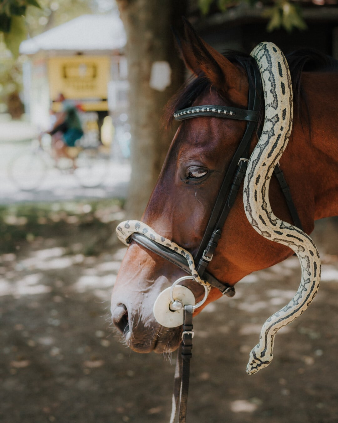 reptile, snake, horse, head, animals, cavalry, portrait, outdoors, nature, mare