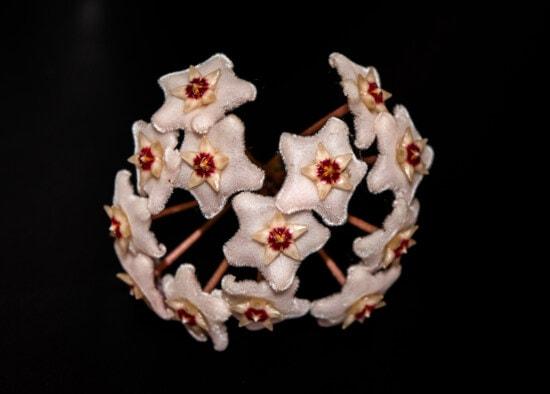 belle, fleur blanche, exotique, détails, spectaculaire, fleur, nature, flore, nature morte, feuille