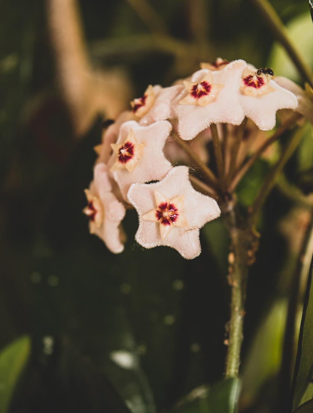 fleur blanche, petit, nectar, exotique, tropical, fleur, nature, feuille, brouiller, à l'extérieur