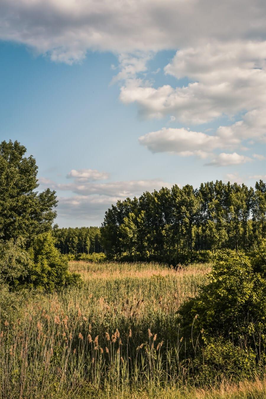 Marschland, Sommerzeit, Wildnis, Bäume, Wald, Tierwelt, Pappel, Natur, Landschaft, Struktur