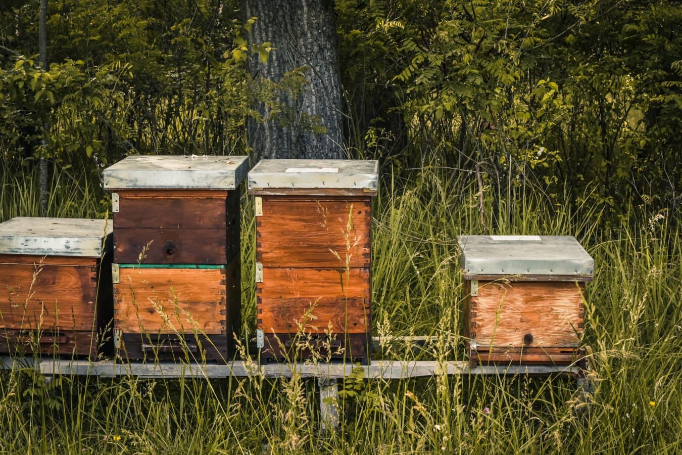 ruche, vintage, style ancien, boîtes de, en bois, pollinisation, nature, nid d'abeille, été, abeille