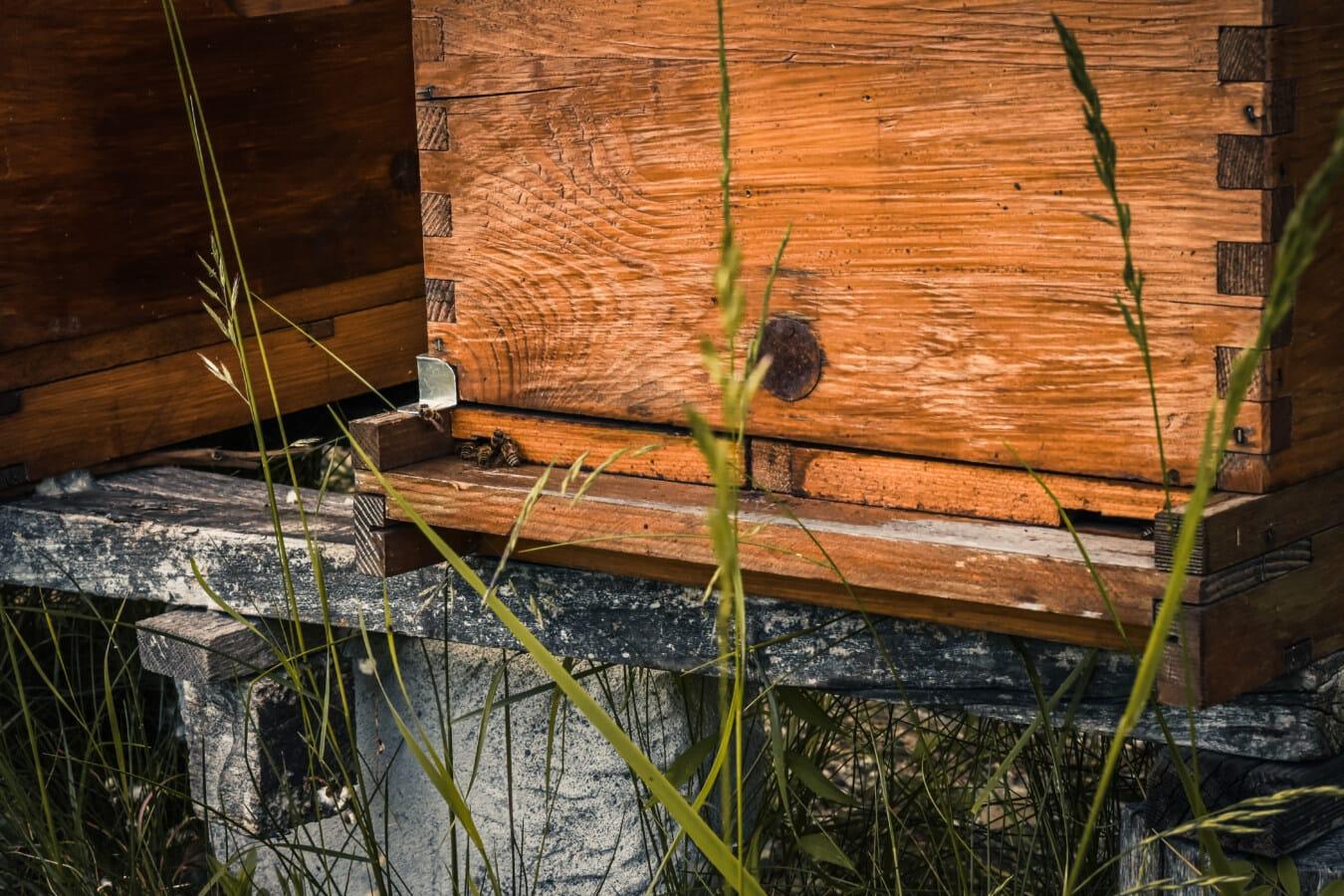 ruche, fermer, abeille, abeille, insecte, en bois, bois, nature, vieux, arbre