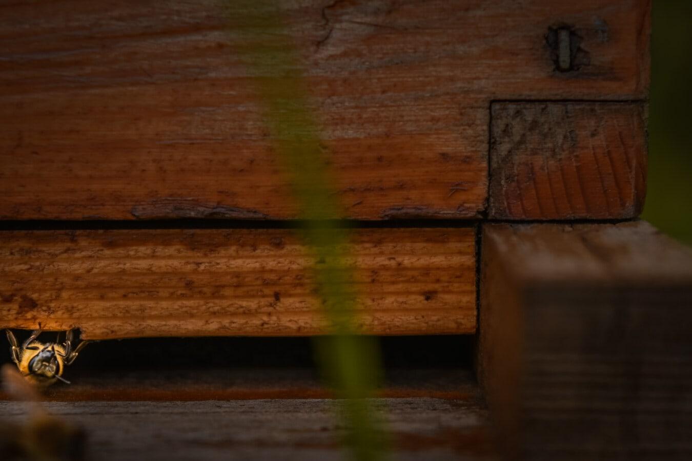 abeille, abeille, nid d'abeille, ruche, fermer, insecte, en détail, bois, retro, menuiserie