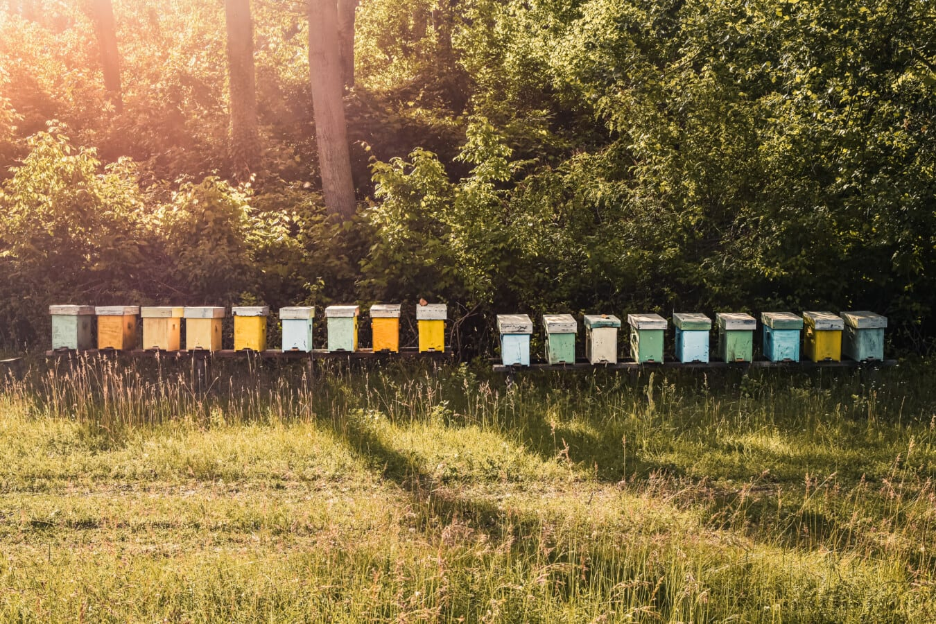 beehive, outdoor, farming, sunlight, summer season, rural, farm, agriculture, nature, grass