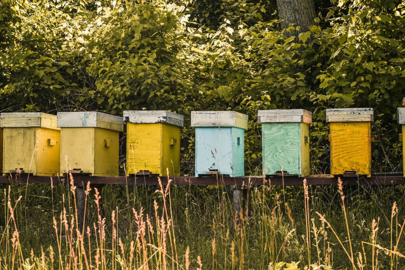 Bienenstock, aus Holz, Boxen, Landwirtschaft, Honigbiene, Honig, Wabe, Insekt, Landwirtschaft, Natur