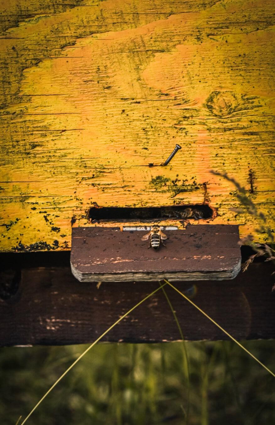 Bienenstock, Honigbiene, Biene, aus Holz, im Feld, alt, Retro, Jahrgang, Kunst, Holz
