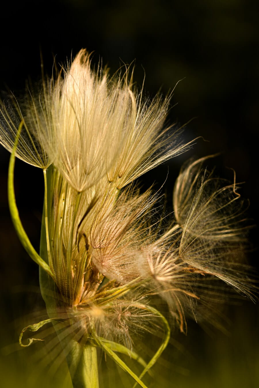 wildflower, close-up, stem, vertical, seed, nature, bright, color, rural, flora