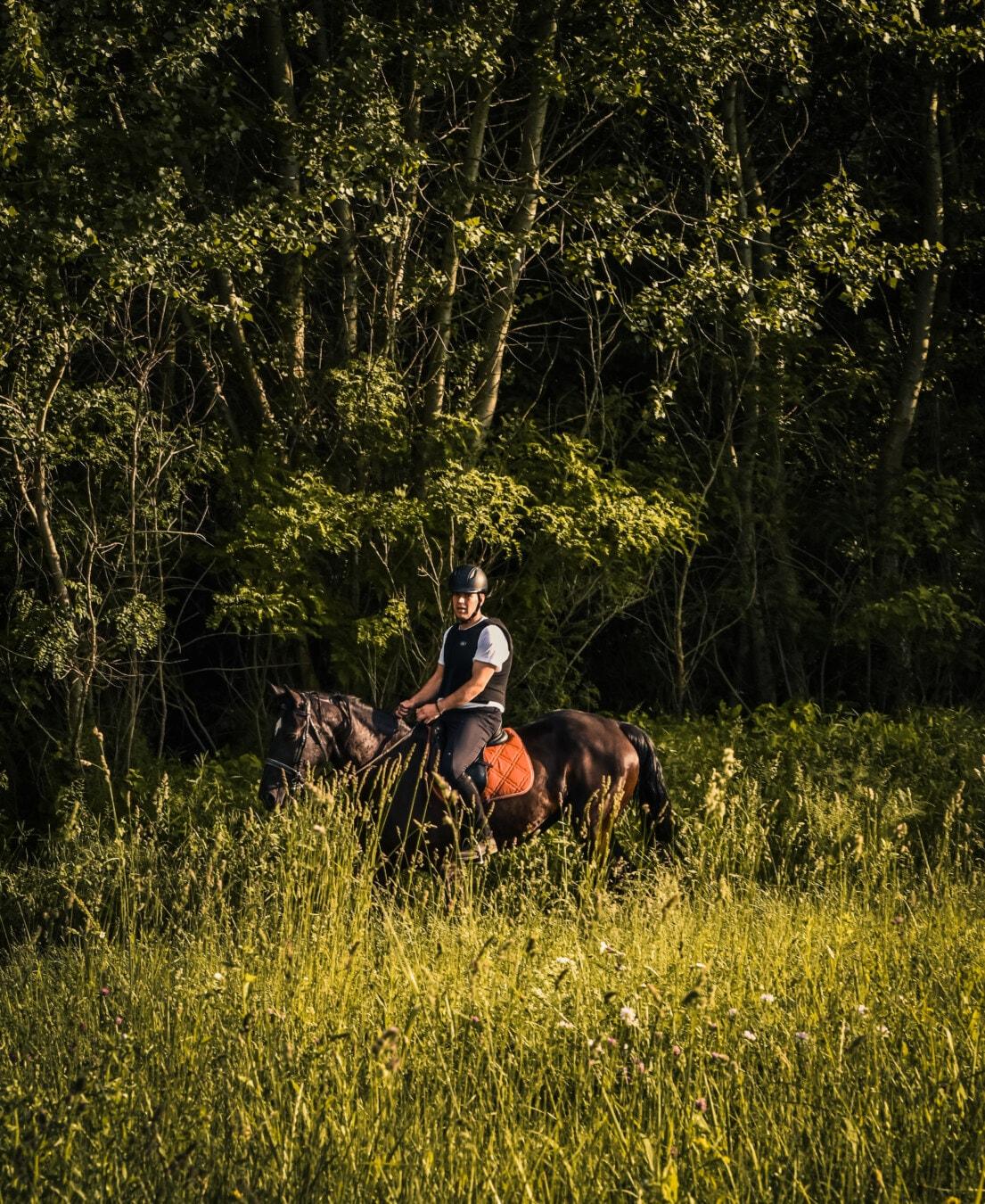 cavallo, a cavallo, pilota, equitazione, programma di formazione, Sport, agricoltore, persona, natura
