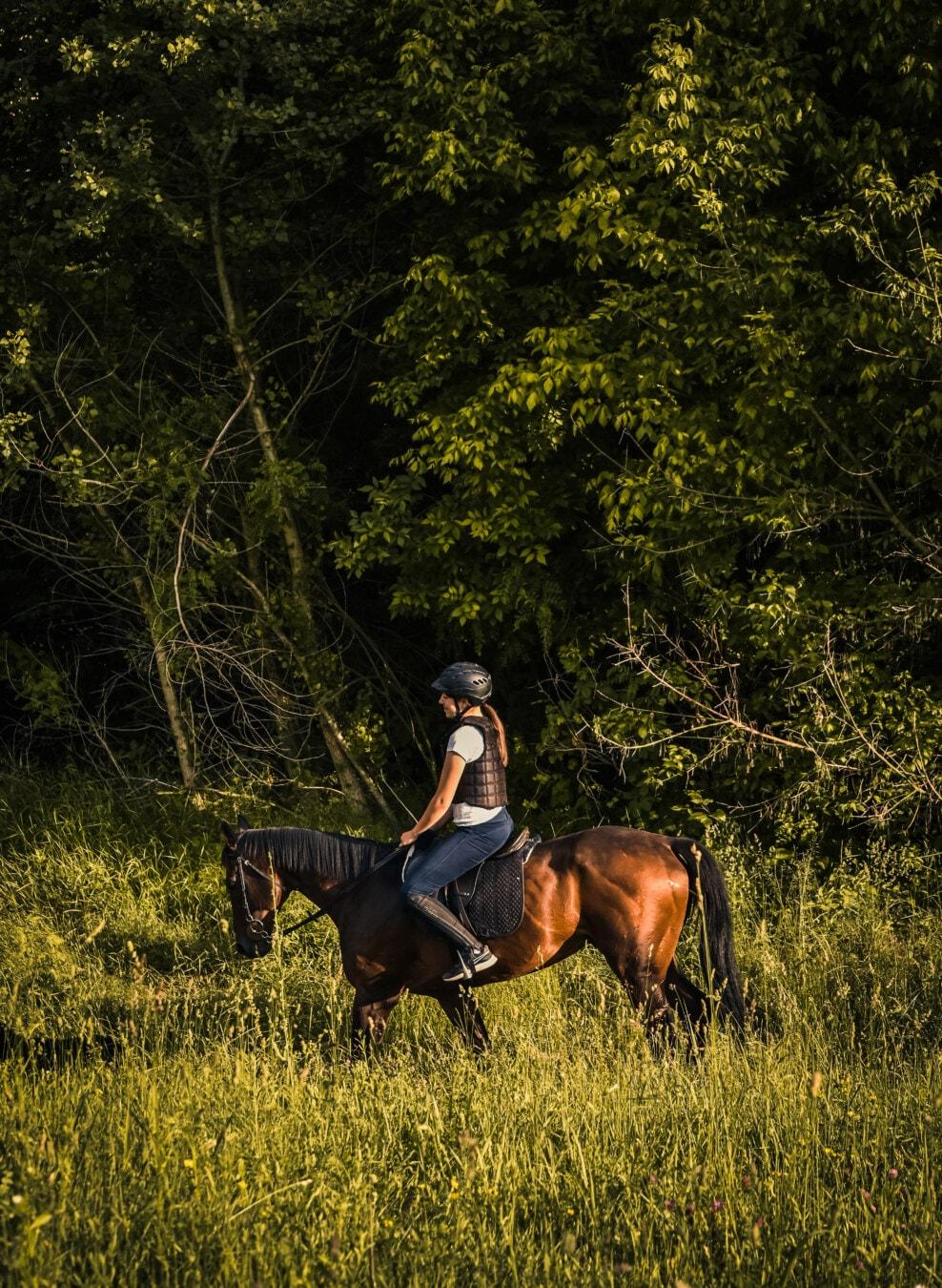 tanara, echitatie, cal, cai, ferma, animale, cowboy, iarba, cavalerie, fată