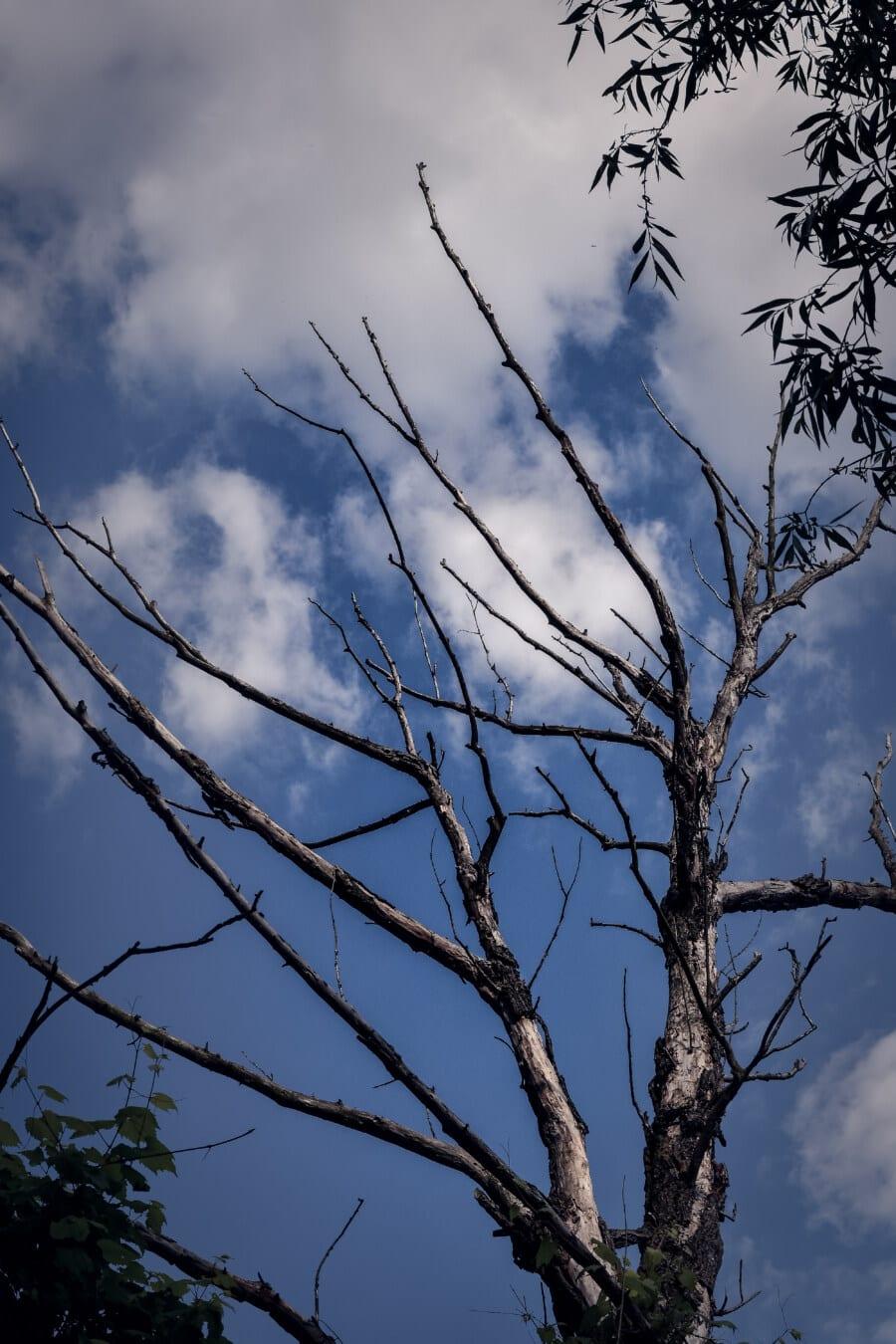 Struktur, trocken, alt, Geäst, blauer Himmel, Ast, Natur, Holz, Landschaft, Blatt