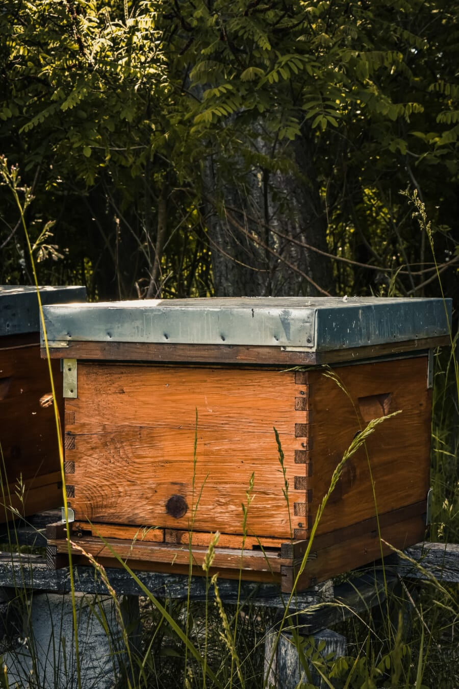 wooden, beehive, vintage, box, agriculture, wood, tree, old, summer, abandoned